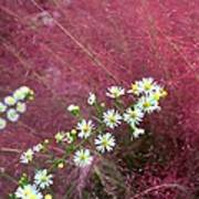 Wild Asters And Muhly Grass Poster