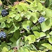 Wild Berries Poster