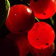 Wild Berries Of The Wetlands 4 Poster