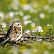 Wild Birds - Field Sparrow Poster