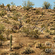 Wild Burros Poster