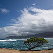Wild Coast - Laie Point - North Shore - Hawaii Poster