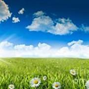 Wild Daisies In The Grass With A Blue Sky Poster
