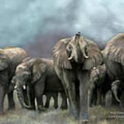 Wild Family Poster