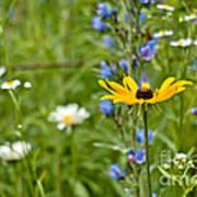 Wild Flower Delight Poster