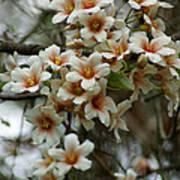 Wild Flowering Beauty Poster