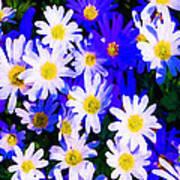 Wild Flowers 3 Poster