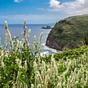 Wild Flowers At Pololu Poster
