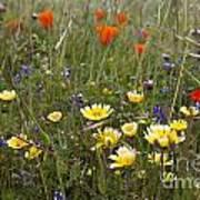 Wild Flowers Russian Ridge Poster
