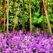 Wild Forest Violets Poster