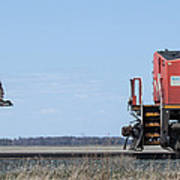 Train Chasing Canada Goose Poster