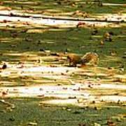 Wild Gray Squirrel Poster