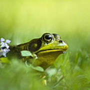 Wild Green Frog Poster