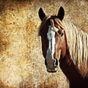 Wild Horse Fade Poster