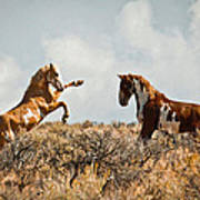 Wild Horse Fight Poster