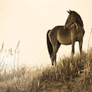 Wild Horse On The Beach Poster