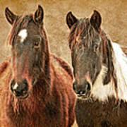 Wild Horse Pair Poster