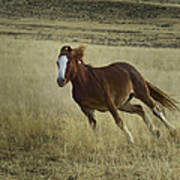 Wild Horse Running-signed-#7273 Poster