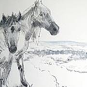Wild Horses Drawing Poster