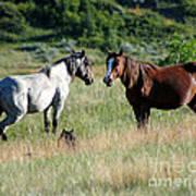 Wild Horses In Medora Poster