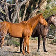 Wild Horses Of Joshua Tree Poster