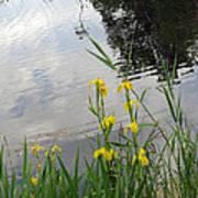 Wild Iris By The Pond Poster by Ausra Huntington nee Paulauskaite