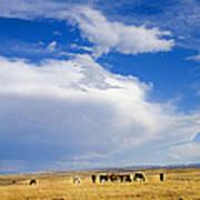 Wild Mustang Herd Grazing Poster