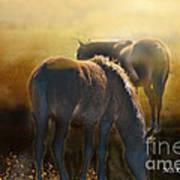 Wild Mustangs In The Mist Poster
