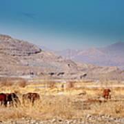 Wild Nevada Mustang Herd Poster