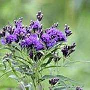 Wild Purple Poster