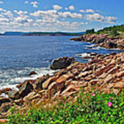 Wild Roses At Lakies Head In Cape Breton Highlands Np-ns Poster