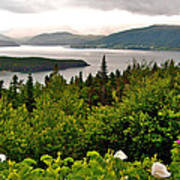 Wild Roses At Photographer's Point Overlooking Bonne Bay In Gros Morne Np-nl Poster
