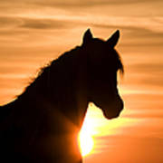 Wild Stallion At Sunrise Poster
