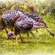 Wild Turkey Hens Poster by Barry Jones