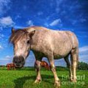Wild Young Horse On The Field Poster