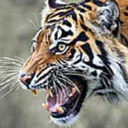 Wildcat II Poster