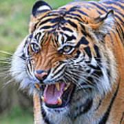 Wildcat IIi Poster