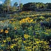 Wildflower Hillside Poster