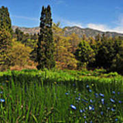 Wildflower Meadow At Descanso Gardens Poster