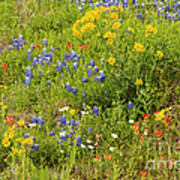 Wildflower Patch Poster