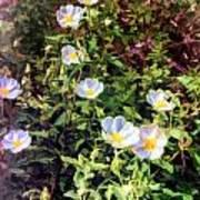 Wildflower Wandering Poster