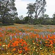Wildflower Wonderland 2 Poster