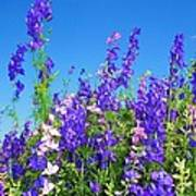 Wildflowers #11 Poster
