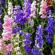 Wildflowers #15 Poster