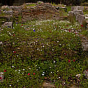 Wildflowers And Olympia Ruins   #9594 Poster