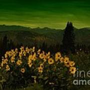 Wildflowers In The Beartooth Mountains Poster