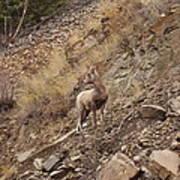 Wildlife Of Montana Poster by Yvette Pichette