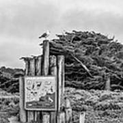 Wildlife On 17 Mile Drive Poster