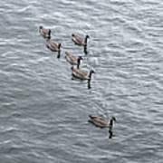 Willamette River Ducks Poster
