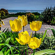 Wind Point Tulips Poster